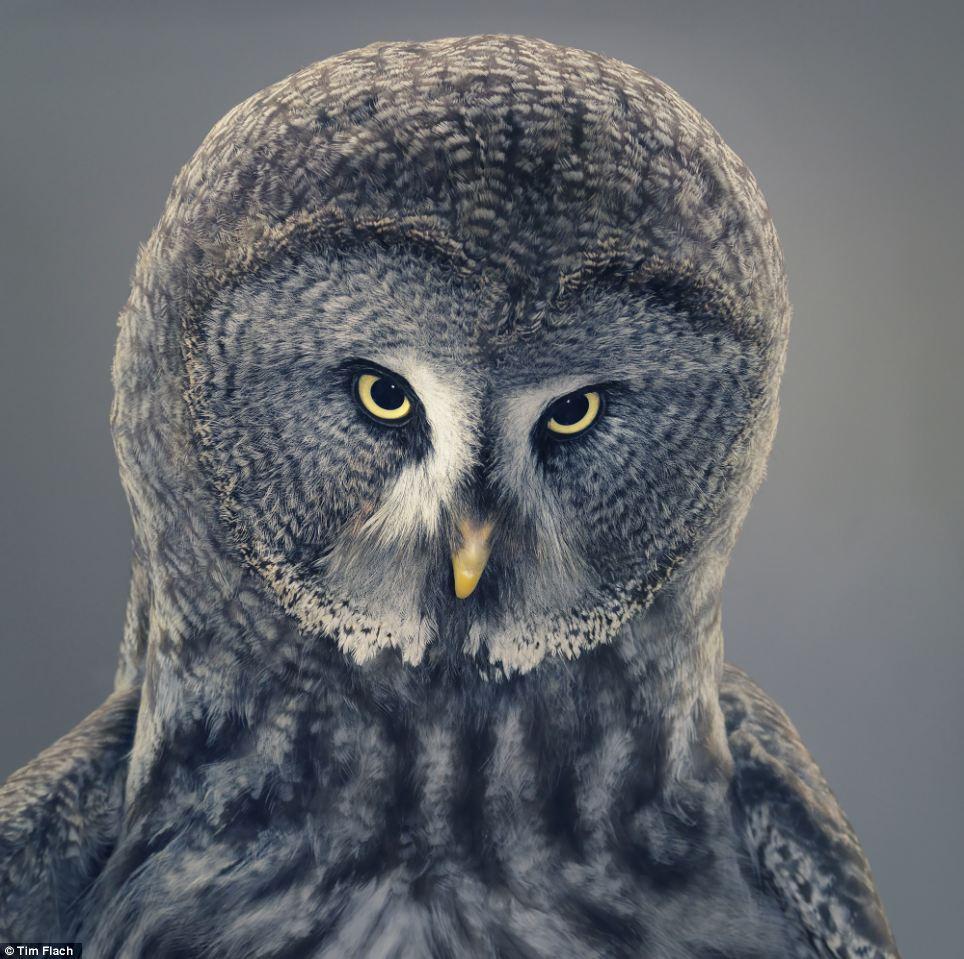 【去他的摄影】独特的动物摄影:兽面,人心