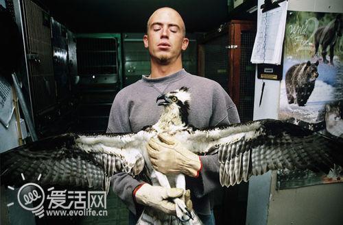 摄影集:野生动物医院里的小动物们
