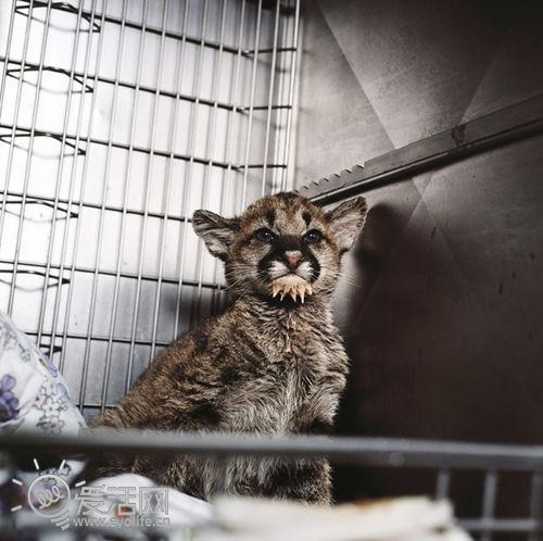 温馨摄影集:野生动物医院里的小动物们