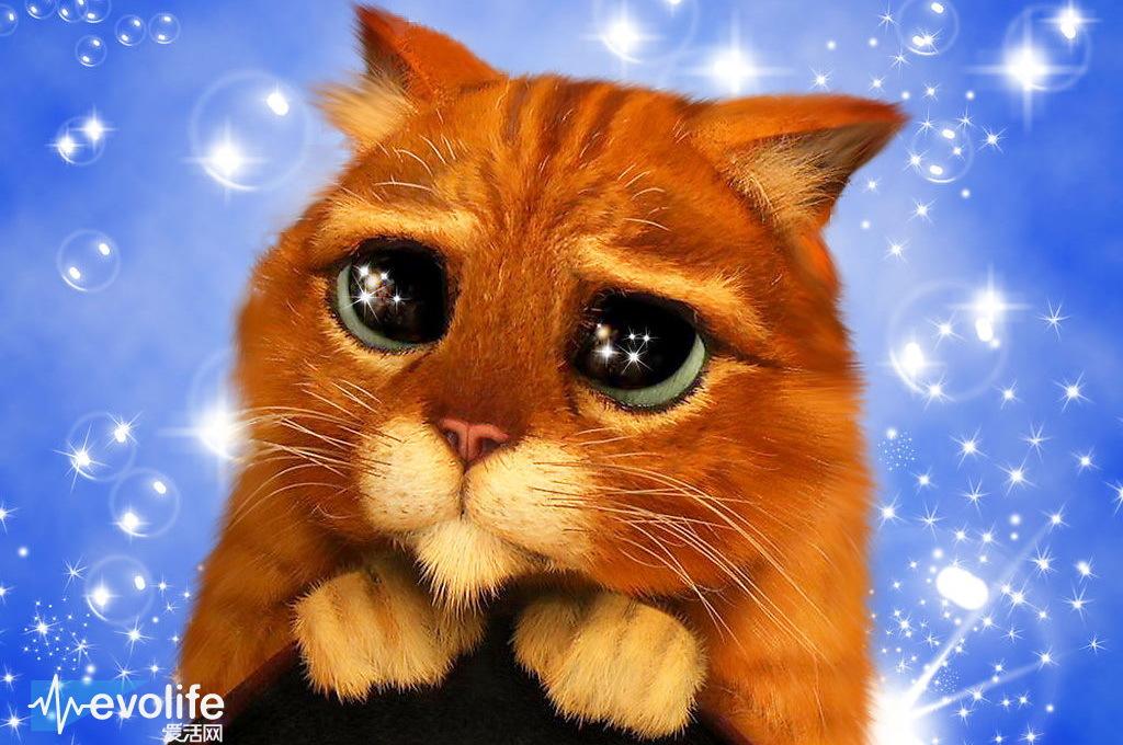 壁纸 动漫 动物 卡通 漫画 猫 猫咪 头像 小猫 桌面 1024_680