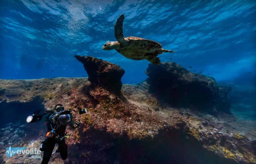 壁纸 海底 海底世界 海洋馆 水族馆 桌面 1011_649